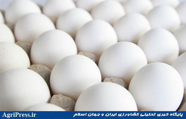 تخممرغ بیمشتری ماه رمضان، پیشرو در گرانی