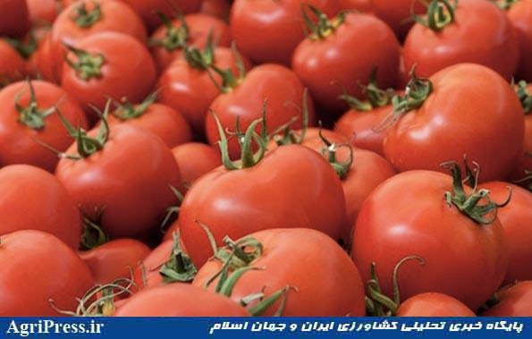 سریال گرانی گوجه فرنگی تکرار شد/ افزایش ۲ برابری قیمت؛ کیلویی ۵ هزار تومان