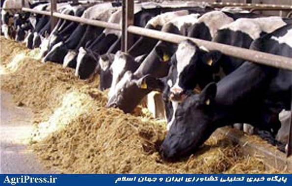 افزایش ۱۰ درصدی قیمت لبنیات/ شیر، ماست و پنیر گران میشود