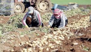 مصادره اراضی کشاورزی فلسطینیها در بیت لحم