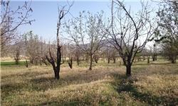 آمار تکاندهنده از جنگلهایی که زغال میشود/آیا دارکوب و سنجاب ایرانی به جنگلهای بلوط باز میگردند؟