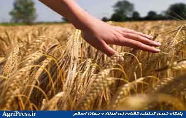 شاخص قیمت زراعت، باغداری و دامداری در تابستان ۹۴ نسبت به فصل قبل ۶٫۹۸ درصد افزایش یافت