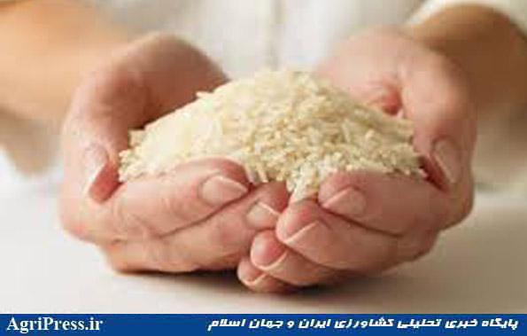 برنج ۲۵.۶ درصد گران شد/ قیمت قند و شکر ۲۲.۷ درصد بالا رفت
