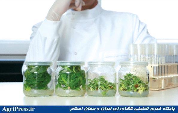 انجمن ارگانیک ایران درباره واردات و تولید محصولات تراریخته در کشور هشدار داد