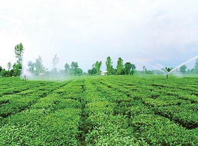 تشکیل فراکسیون کشاورزی در مجلس دهم