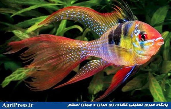 واردات هفتگی ۱۰۰ میلیون تومان ماهی زینتی و تعطیلی تولید داخل