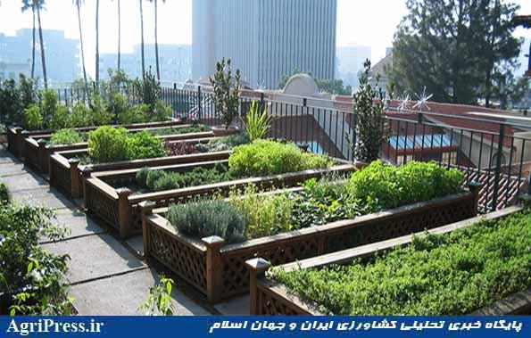 کشاورزی شهری 4