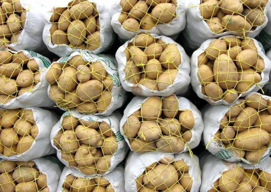 سالانه ۲۰ درصد محصول سیبزمینی کشور هدر می رود/ ۹۰ درصد انبارها غیراستاندارد هستند