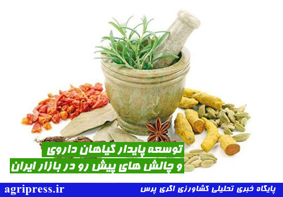 توسعه پایدار گیاهان دارویی و چالش های پیش رو در بازار ایران