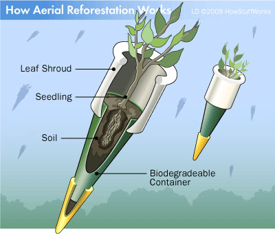aerial-reforestation-3