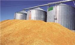 قیمت شکر افزایش یافت/ کاهش ۲ دلاری گندم در بازارهای جهانی