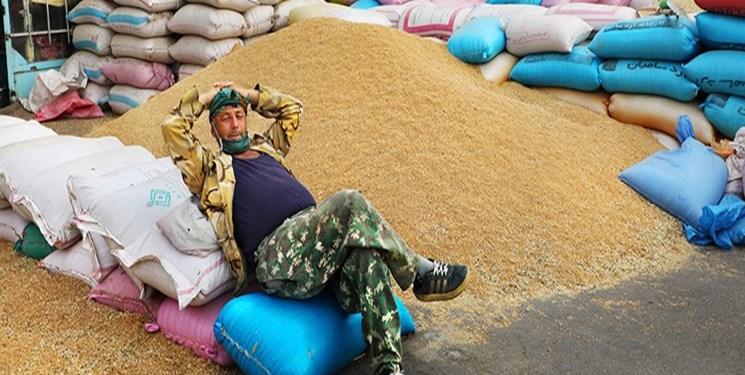 اشتیاق گندمکاران برای فروش گندم به دولت