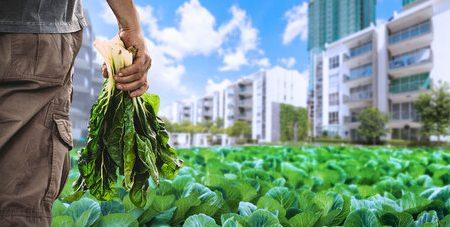 کشاورزی شهری ایدهای برای زندگی شهری